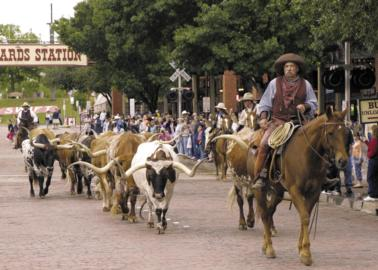 (Longhorn herd at Ft. Worth Stockyards)